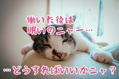 眠い猫ちゃん