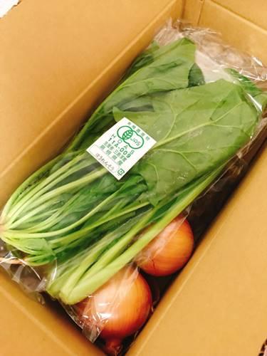 坂ノ途中お試しセットお野菜セットの中身 新鮮な野菜