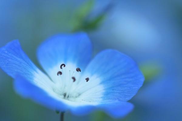 ココナラ占い「守護霊からのメッセージ」鑑定している占い師のオーラのイメージ(青くて落ち着いている)